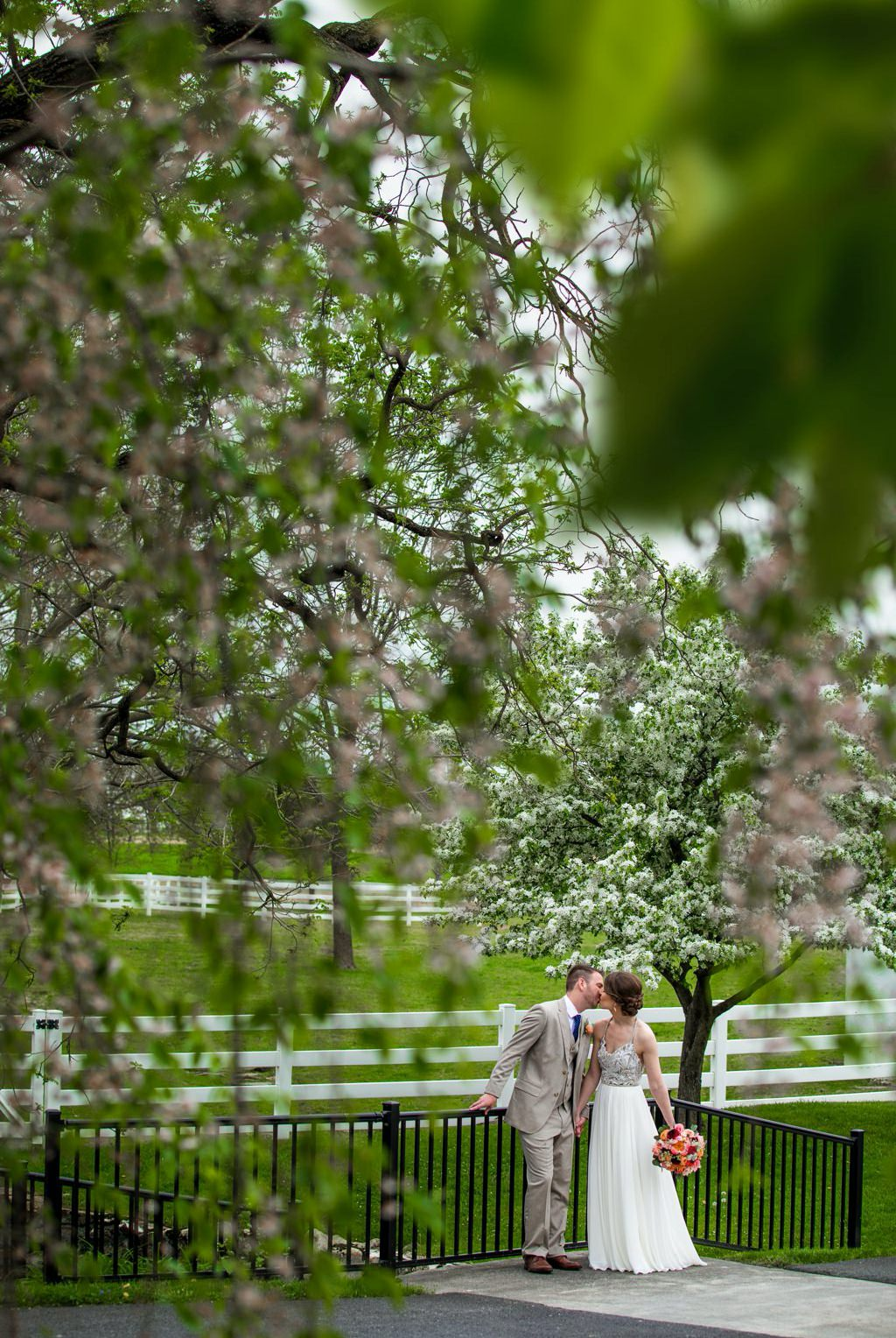 A bride and groom posing under spring blossoms on their wedding day, at the The Barn at Silverstone in Lancaster, PA
